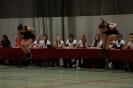 Prov. Kampioenschap Teams +15 - 22/02/2014 - Bierbeek_13
